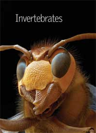 Encyclopedia Britannica Illustrated Science Library 2009 - Invertebrates